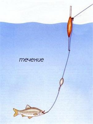 Ловля язя на живца » Секреты ловли различной рыбы от
