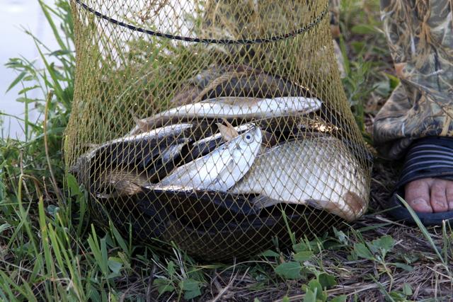 тесто для прикормки рыбы