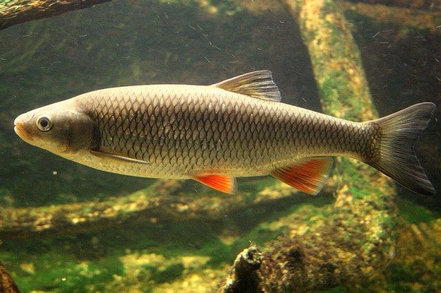 Фото и видео виды рыб на ахтубе