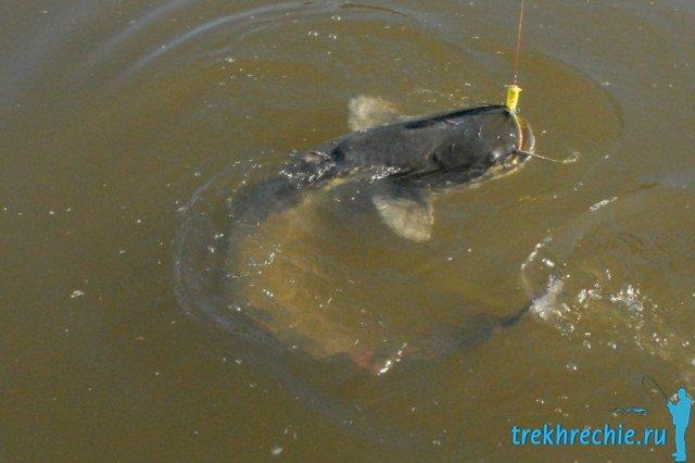 Превосходная рыбалка на сома в июле на рыболовной базе Трехречье
