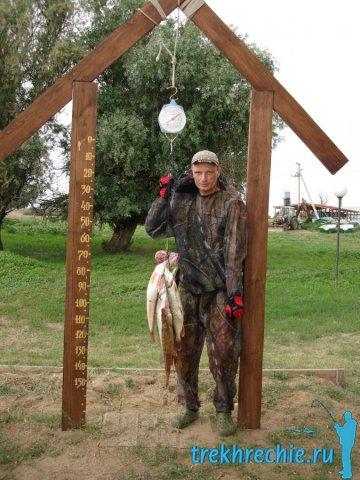 Ловля судака и берша осенью в